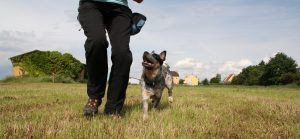 Freiwilliger Blickkontakt vom Hund